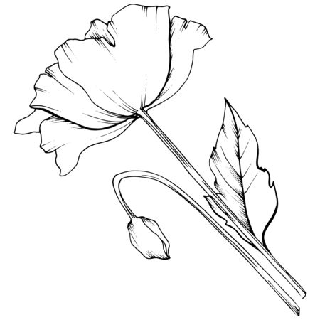 Wildflower poppy in a vector style isolated. Vectores