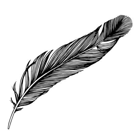 Pluma de pájaro de vector de ala aislada. Arte de tinta grabada en blanco y negro. Elemento de ilustración de plumas aisladas.