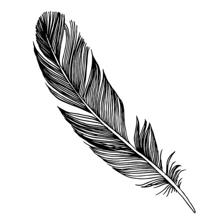 Vector bird feather from wing isolated. Black and white engraved ink art. Isolated feathers illustration element.