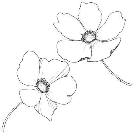 Wild rose in a vector style isolated.
