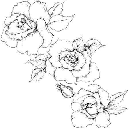 Rose flower in a vector style isolated.