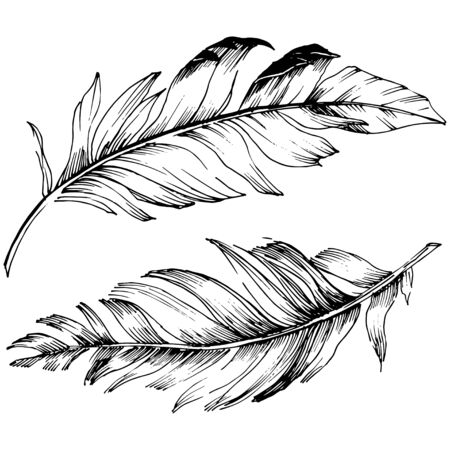 Vector bird feather from wing isolated. Isolated illustration element. Black and white engraved ink art. Vector Illustratie