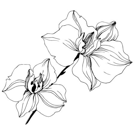 Vector tropical orchid flowers. Floral botanical flower.