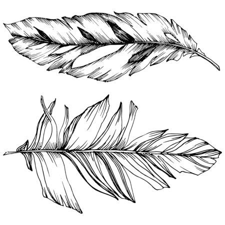Vector bird feather from wing isolated. Isolated illustration element. Black and white engraved ink art.