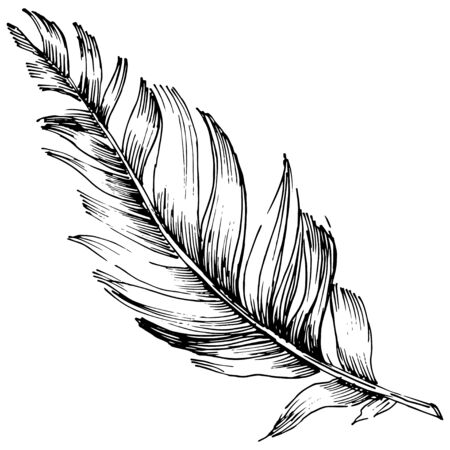 Vector bird feather from wing isolated. Isolated illustration element. Black and white engraved ink art. Vector Illustration