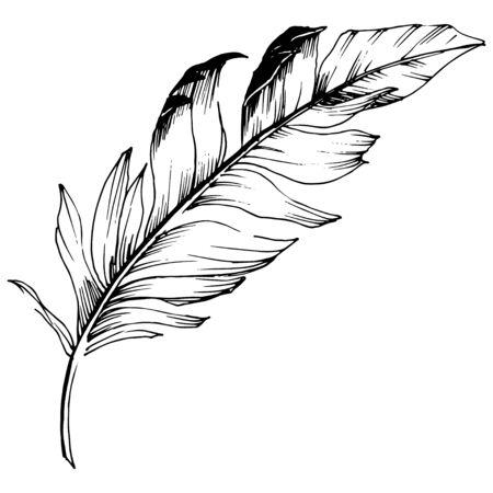 Piuma di uccello di vettore dall'ala isolata. Elemento di illustrazione isolato. Inchiostro inciso in bianco e nero art. Vettoriali