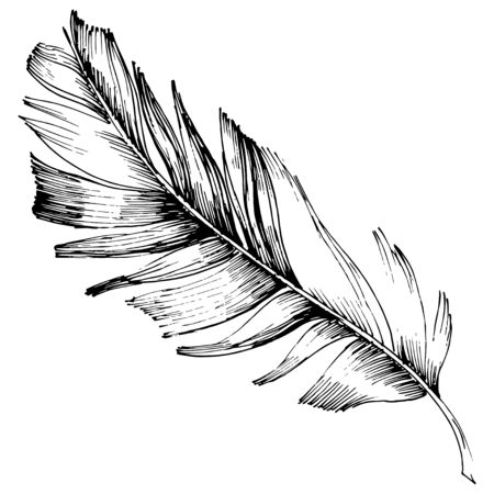 Vector bird feather from wing isolated. Isolated illustration element. Vector feather for background, texture, wrapper pattern, frame or border. Black and white engraved ink art. Illustration