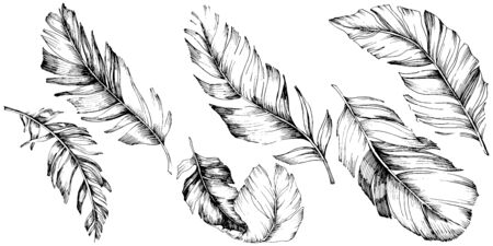 Vector bird feather from wing isolated. Isolated illustration element. Vector feather for background, texture, wrapper pattern, frame or border. Black and white engraved ink art. 版權商用圖片 - 135719078