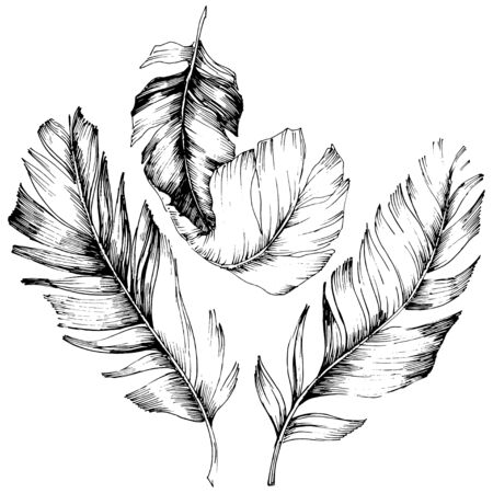 Vector bird feather from wing isolated. Isolated illustration element. Vector feather for background, texture, wrapper pattern, frame or border. Black and white engraved ink art. 版權商用圖片 - 135719081