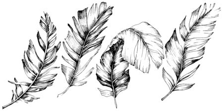 Vector bird feather from wing isolated. Isolated illustration element. Vector feather for background, texture, wrapper pattern, frame or border. Black and white engraved ink art. 版權商用圖片 - 135719084