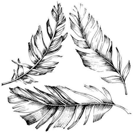 Vector bird feather from wing isolated. Isolated illustration element. Vector feather for background, texture, wrapper pattern, frame or border. Black and white engraved ink art. 版權商用圖片 - 135719085