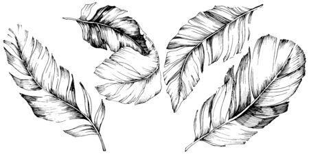 Vector bird feather from wing isolated. Isolated illustration element. Vector feather for background, texture, wrapper pattern, frame or border. Black and white engraved ink art. 版權商用圖片 - 135719088