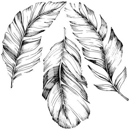Vector bird feather from wing isolated. Isolated illustration element. Vector feather for background, texture, wrapper pattern, frame or border. Black and white engraved ink art. 版權商用圖片 - 135719109