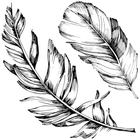 Vector bird feather from wing isolated. Isolated illustration element. Vector feather for background, texture, wrapper pattern, frame or border. Black and white engraved ink art. 版權商用圖片 - 135719110
