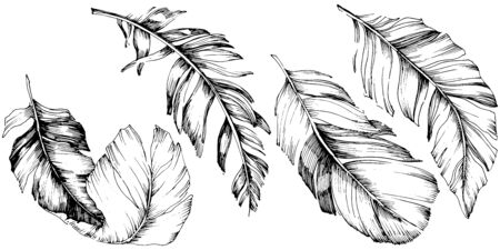 Vector bird feather from wing isolated. Isolated illustration element. Vector feather for background, texture, wrapper pattern, frame or border. Black and white engraved ink art. 版權商用圖片 - 135719207