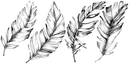 Vector bird feather from wing isolated. Isolated illustration element. Vector feather for background, texture, wrapper pattern, frame or border. Black and white engraved ink art. 版權商用圖片 - 135719218