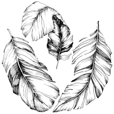 Vector bird feather from wing isolated. Isolated illustration element. Vector feather for background, texture, wrapper pattern, frame or border. Black and white engraved ink art. 版權商用圖片 - 135719222