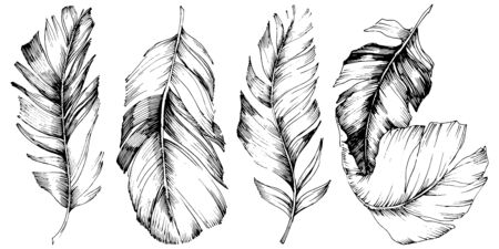 Vector bird feather from wing isolated. Isolated illustration element. Vector feather for background, texture, wrapper pattern, frame or border. Black and white engraved ink art. 版權商用圖片 - 135719225
