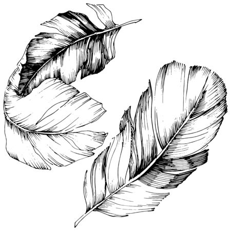 Vector bird feather from wing isolated. Isolated illustration element. Vector feather for background, texture, wrapper pattern, frame or border. Black and white engraved ink art. 版權商用圖片 - 135718996