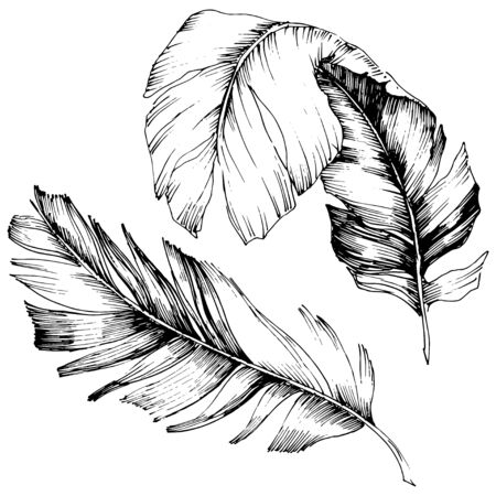 Vector bird feather from wing isolated. Isolated illustration element. Vector feather for background, texture, wrapper pattern, frame or border. Black and white engraved ink art. 版權商用圖片 - 135718997