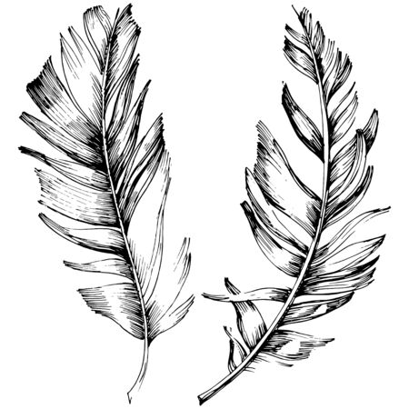 Vector bird feather from wing isolated. Isolated illustration element. Vector feather for background, texture, wrapper pattern, frame or border. Black and white engraved ink art. 版權商用圖片 - 135719002