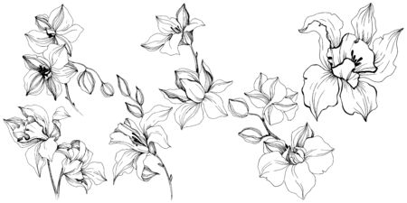 Vector tropical orchid flowers. Floral botanical flower. Isolated illustration element. Vector wildflower for background, texture, wrapper pattern, frame or border.