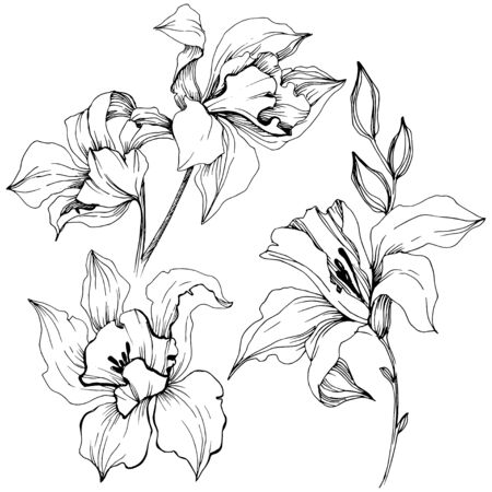 Vector tropical orchid flowers. Floral botanical flower. Isolated illustration element. Vector wildflower for background, texture, wrapper pattern, frame or border. 版權商用圖片 - 135718963
