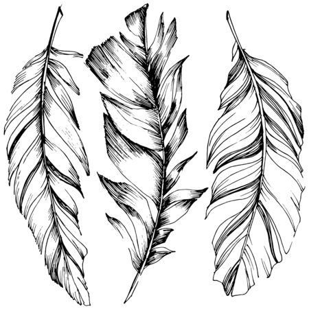 Vector bird feather from wing isolated. Isolated illustration element. Vector feather for background, texture, wrapper pattern, frame or border. Black and white engraved ink art. 版權商用圖片 - 135718968