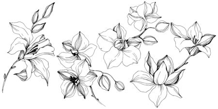 Vector tropical orchid flowers. Isolated illustration element.