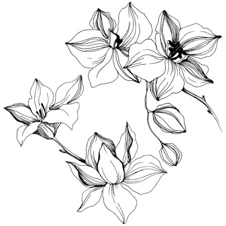 Vector tropical orchid flowers. Isolated illustration element. Stock fotó - 134329203