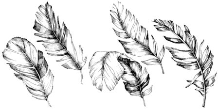 Vector bird feather from wing isolated. Isolated illustration element. Black and white engraved ink art. Illusztráció