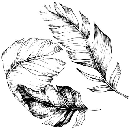 Vector bird feather from wing isolated. Isolated illustration element. Black and white engraved ink art. Stock fotó - 134329209
