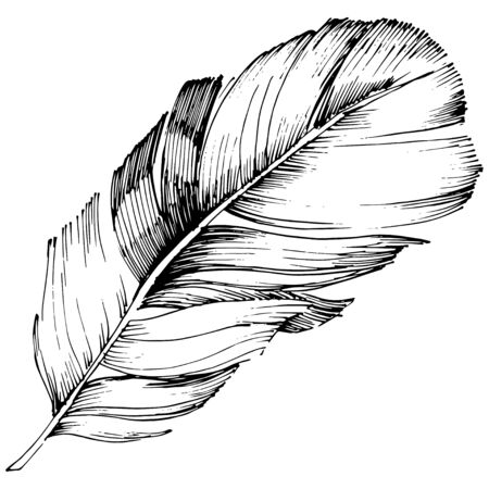 Vector bird feather from wing isolated. Isolated illustration element. Black and white engraved ink art. Stock fotó - 134329215