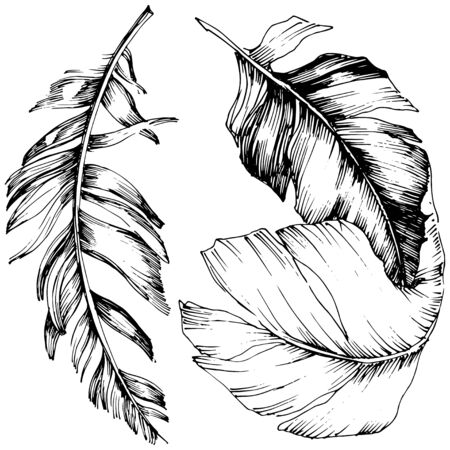 Vector bird feather from wing isolated. Isolated illustration element. Black and white engraved ink art. Stock fotó - 134329245