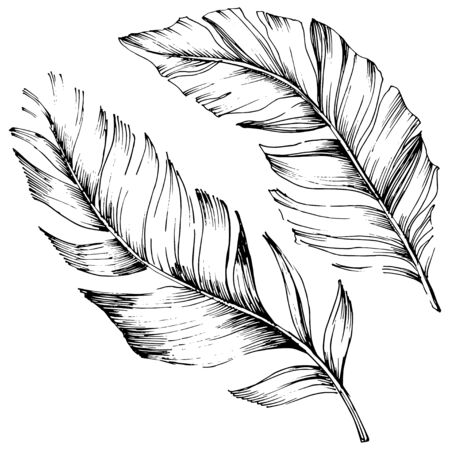 Vector bird feather from wing isolated. Isolated illustration element. Black and white engraved ink art. Stock fotó - 134329264