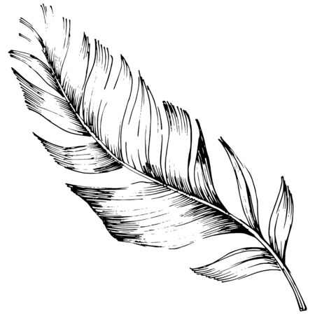 Vector bird feather from wing isolated. Isolated illustration element. Black and white engraved ink art. Stock fotó - 134329334