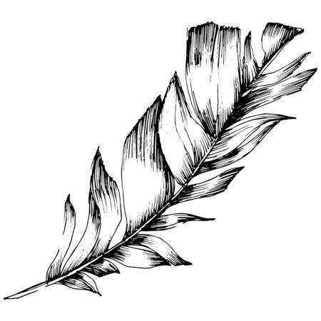Plume d'oiseau de vecteur d'aile isolée. Élément d'illustration isolé. Art d'encre gravé en noir et blanc.