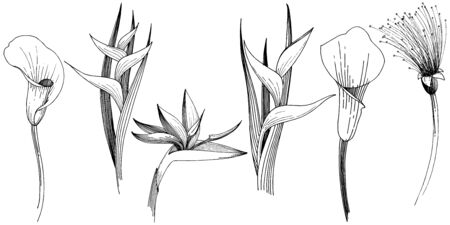 Tropical flowers in a vector style. Isolated illustration element. Black and white engraved ink art. Illusztráció