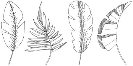 Vector tropical leaves isolated. Black and white engraved ink art. Stock fotó - 133422323