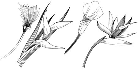 Tropical flowers in a vector style. Isolated illustration element. Black and white engraved ink art. Ilustracja
