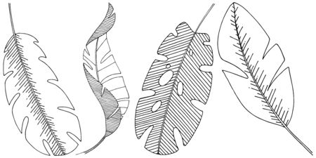 Vector tropical leaves isolated. Black and white engraved ink art.