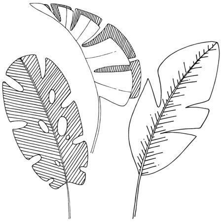 Vector tropical leaves isolated. Black and white engraved ink art. Stock fotó - 133422934