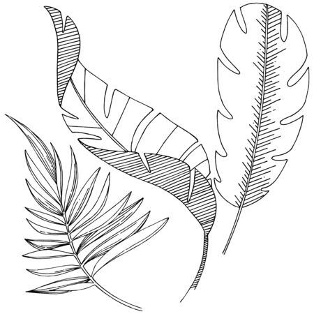 Vector tropical leaves isolated. Black and white engraved ink art. Stock fotó - 133422968