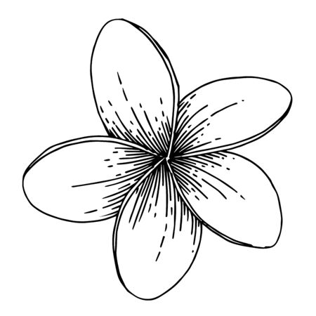 Vector Exotic tropical hawaiian summer flower. Black and white engraved ink art. Isolated flowers illustration element. Stock fotó - 134329339