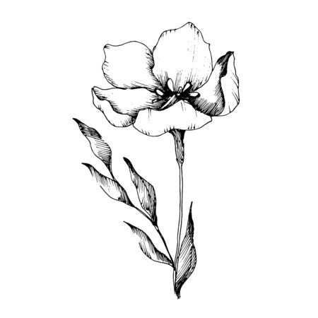 Vector Flax floral botanical flowers. Black and white engraved ink art. Isolated flax illustration element.