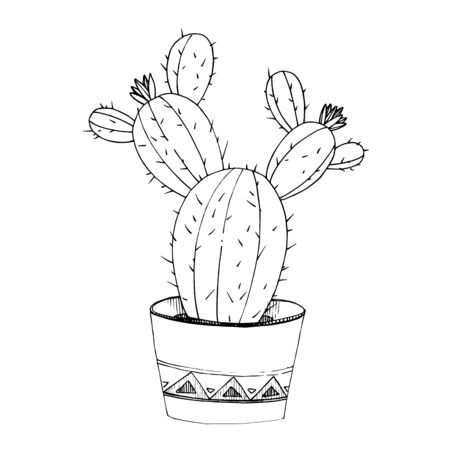 Vector Cacti floral botanical flowers. Black and white engraved ink art. Isolated cactus illustration element.