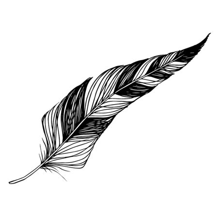 Vector Bird feather from wing isolated. Black and white engraved ink art. Isolated feathers illustration element. 版權商用圖片 - 135038368