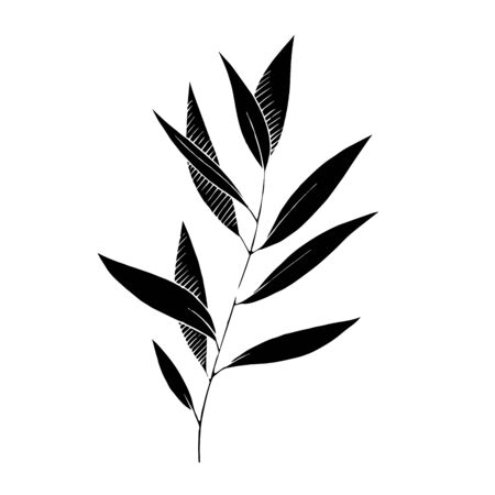 Vector Eucalyptus leaves branch. Black and white engraved ink art. Isolated branches illustration element.