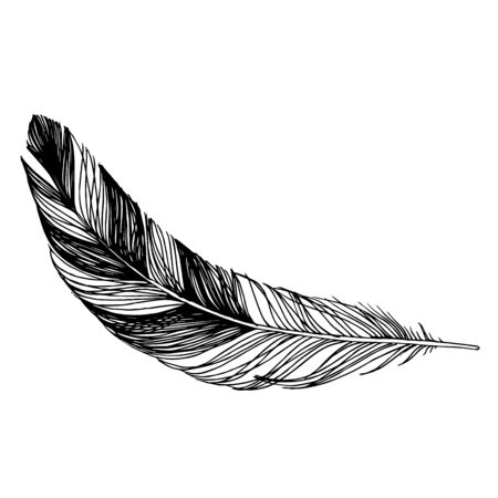 Vector Bird feather from wing isolated. Black and white engraved ink art. Isolated feathers illustration element. Illusztráció