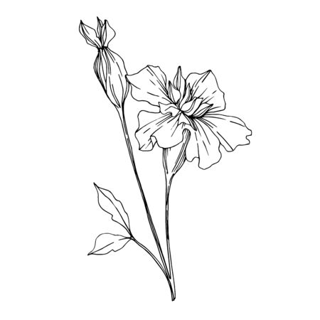 Vector Marigold floral botanical flowers. Black and white engraved ink art. Isolated tagetes illustration element. 版權商用圖片 - 135038394